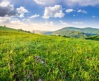 Prato verde su un pendio di collina della montagna ad alba Immagine Stock