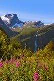 Prato vicino al ghiacciaio di Briksdal - Norvegia Fotografia Stock Libera da Diritti