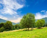 Prato vicino alla foresta in montagne ad alba Fotografia Stock