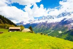 Prato vicino a Mont Blanc, alpi di estate Fotografia Stock Libera da Diritti