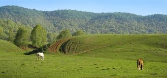 Prato vuoto verde della primavera Fotografia Stock