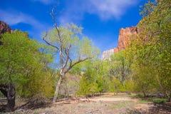Prato in Zion National Park fotografie stock libere da diritti