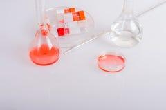 Pratos de Labware para a experiência bioquímica no laboratório do cientista Fotografia de Stock