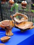 Pratos de madeira Imagem de Stock Royalty Free