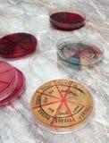 Pratos de Petri imagem de stock