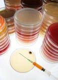Pratos de Petri   Imagens de Stock