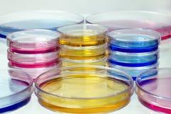 Pratos de Petri com líquidos coloridos Imagens de Stock Royalty Free