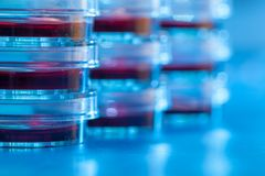 Pratos de Petri no material claro azul Conceito do laboratório Imagem de Stock Royalty Free