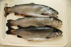 Pratsam fisk Arkivfoton