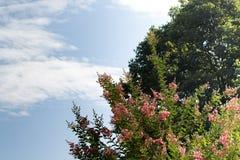 Prawa strona dominuje kwiatonośnych drzewa i nieba rozszczepionego wschodnie wybrzeże usa Jednoczący States-3473 zdjęcie royalty free