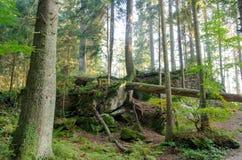 prawdziwa las zdjęcie royalty free