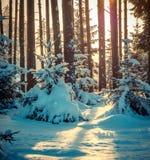 prawdziwa las Obrazy Royalty Free