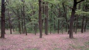 prawdziwa las Obrazy Stock