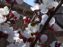 Prawdziwa wiosna Obrazy Stock