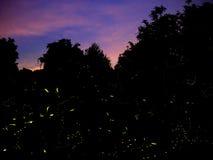 Prawdziwi świetlików ślada w Włochy, 2017 Zdjęcia Royalty Free