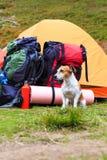 Prawdziwy campingowy przyjaciel Zdjęcie Royalty Free