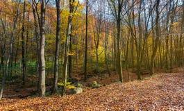 Prawie bezlistny las w jesieni obraz stock