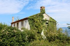 Prawie całkowicie przerastający zaniechany rodzina dom zakrywający z śpioszków drzewami i roślinami obrazy stock