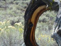 Prawie nieżywy drzewo Obraz Stock