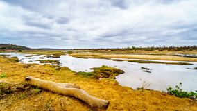 Prawie sucha Olifant rzeka w Kruger parku narodowym w Południowa Afryka Fotografia Royalty Free