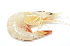 Prawn Royalty Free Stock Image