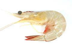 Prawn stock photo