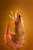 Prawn Royalty Free Stock Photos