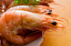Prawn Royalty Free Stock Photography