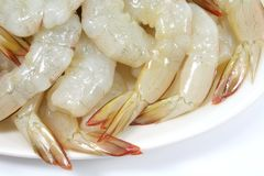 Prawn Dish Raw and Fresh Royalty Free Stock Images