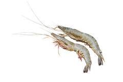 Prawn fish isolated on white Royalty Free Stock Photography