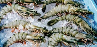Prawn newly fished and stored in boxes with ice. royalty free stock image