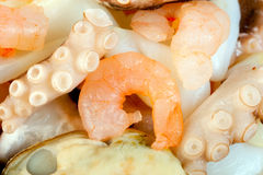 Prawn octopus squid Royalty Free Stock Photos