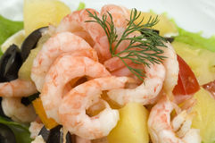 Prawn Salad. Stock Images