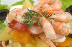 Prawn Salad. Royalty Free Stock Image