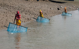 Prawn seed collection in Sunderban. A group of women dragging nylon nets to collect tiger prawn seed on the river 'Matla'. The Major problem threatening the Stock Photography
