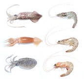 Prawn shrimp squid cuttlefish Stock Photo