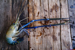 Prawn on wood. Prawn on table royalty free stock photo