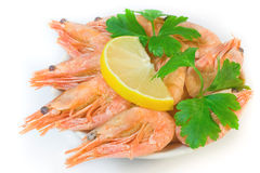 Prawns Royalty Free Stock Image