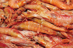 Prawns Royalty Free Stock Photo