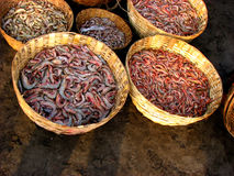Prawns. Different types of prawns in fisherman baskets at an Indian port Stock Photos