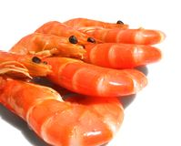 Prawns. Still life from royal prawns Stock Photos