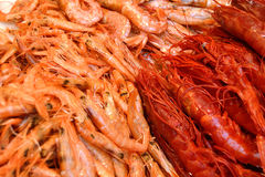 Prawns Stock Photo