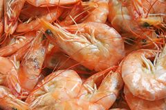 Prawns Stock Photography