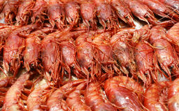 Prawns. Italian prawns cooked to plate Royalty Free Stock Images