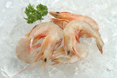 Prawns Stock Images