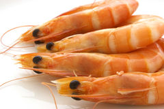 Prawns Royalty Free Stock Photos