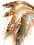 Prawns Royalty Free Stock Images