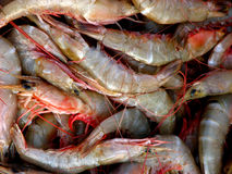 Prawns Background. A background of fresh prawns Stock Images