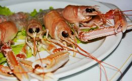 Prawns background royalty free stock images
