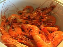 Prawns. Belongs to the Crustaceans family Royalty Free Stock Photo